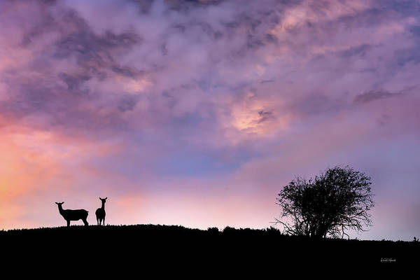 Photograph - Elk Silhouette Sunset by Leland D Howard