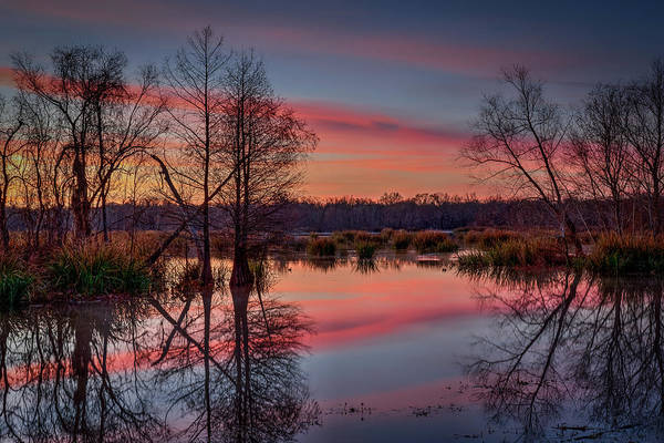 Photograph - Elm Lake 2 by David Heilman