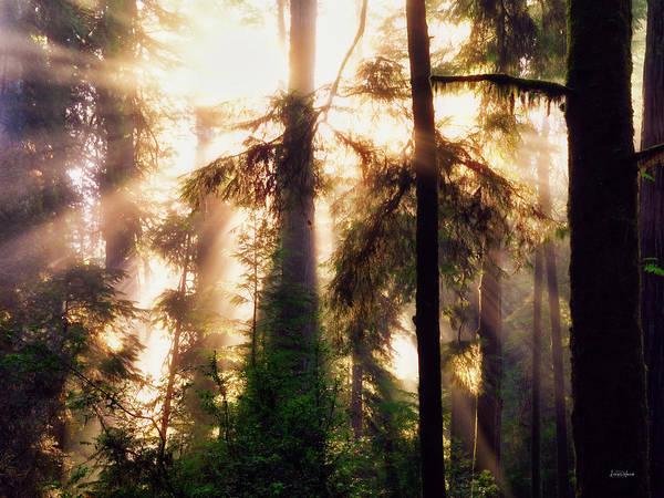 Eloquent Wall Art - Photograph - Eloquent Redwoods by Leland D Howard