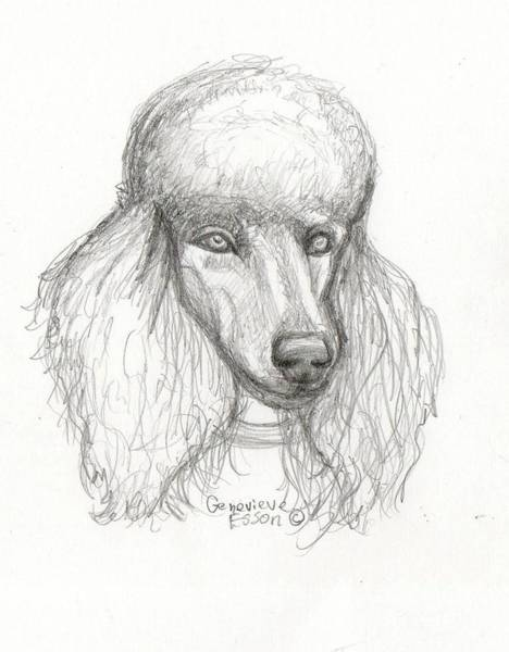 Wall Art - Drawing - Sketch Of Elsie by Genevieve Esson