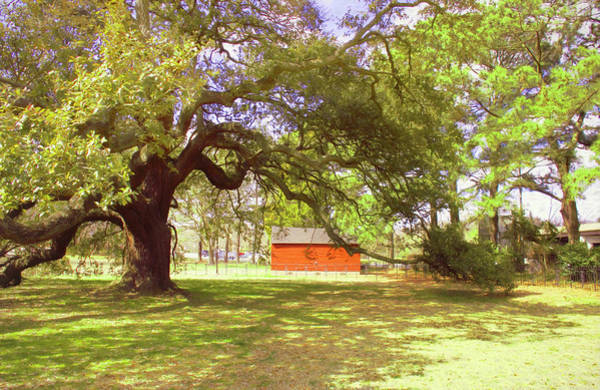 Photograph - Beneath The Old Emancipation Oak Tree by Ola Allen