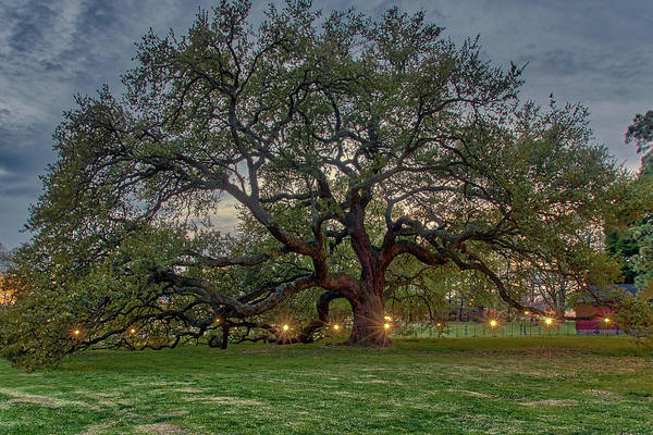 Photograph - Emancipation Oak At Dusk by Jerry Gammon