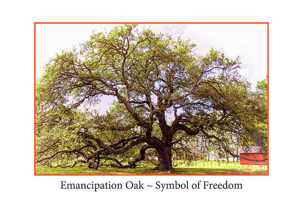Photograph - Emancipation Oak Symbol Of Freedom Poster by Ola Allen
