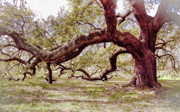 Photograph - Emancipation Oak Tree Branches At Hampton University by Ola Allen