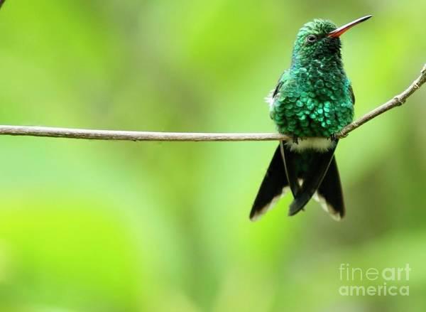 Wall Art - Photograph - Emerald Hummingbird by Kathleen Struckle