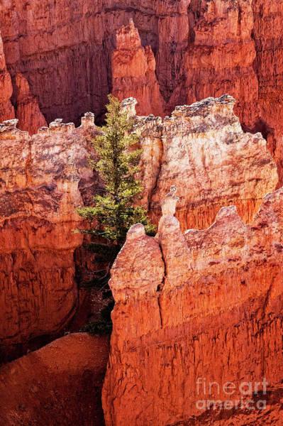Photograph - Emerging Tree by Scott Kemper