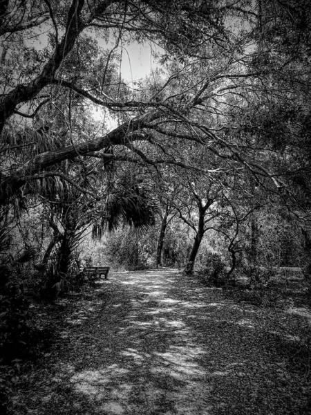 Photograph - Emerson Walk by Robert Stanhope