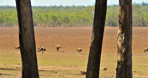 Photograph - Emus At Minnamoolka by Joan Stratton
