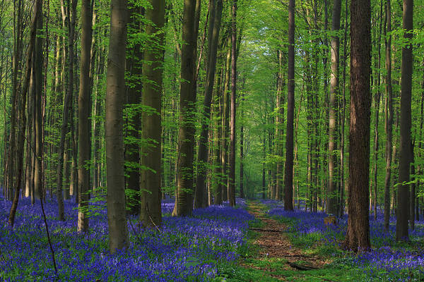 Wall Art - Photograph - Enchanted Bluebell Lane by Bridget Calip