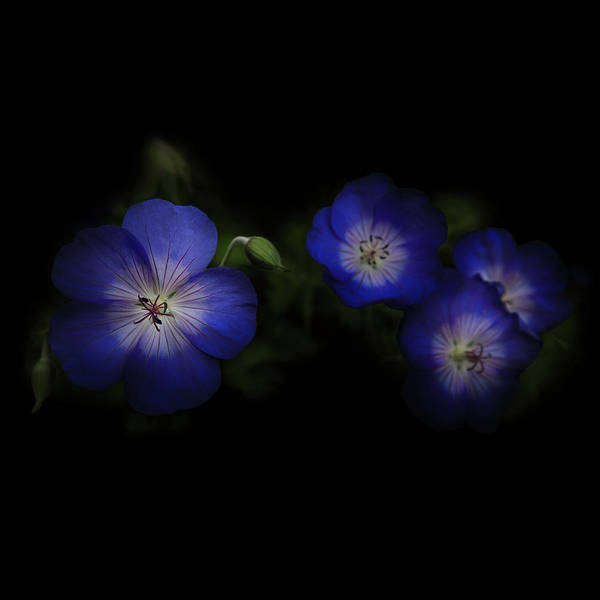 Photograph - Enchanted Blues In Square by Debra and Dave Vanderlaan