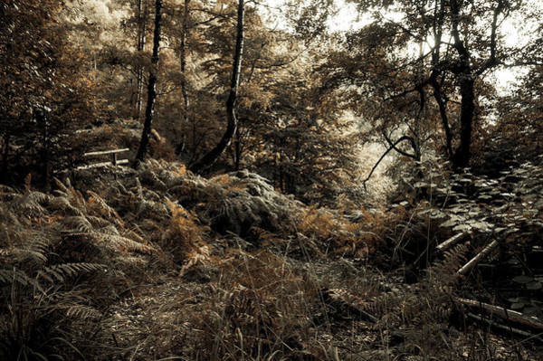 Photograph - Enchanted Forest. Gothic by Jenny Rainbow