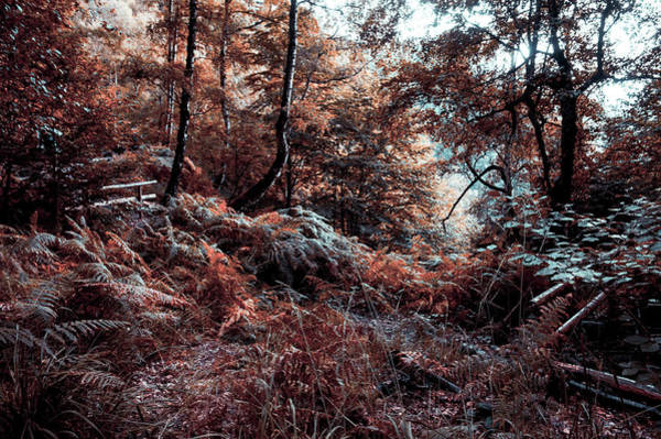 Photograph - Enchanted Forest In Moonlight by Jenny Rainbow