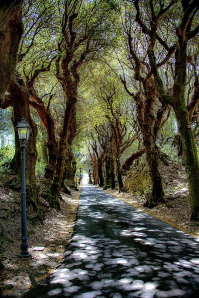 Apostolic Palace Photograph - Enchanted Forest by Joseph Yarbrough