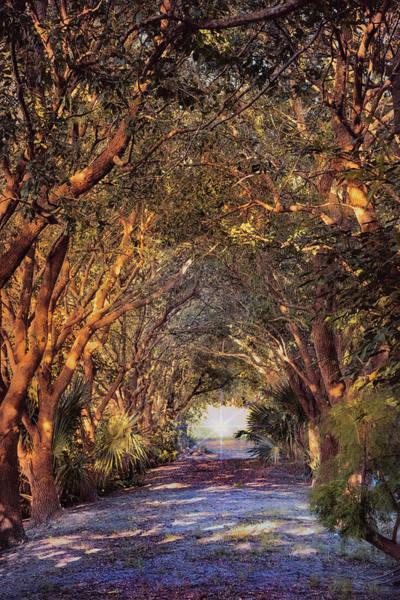 Photograph - Enchanted Pathway by John Rivera