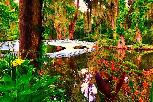 Photograph - Enchanted Pond by Jack Wilson
