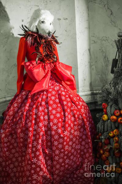 Photograph - Enchanted Princess by Eva Lechner