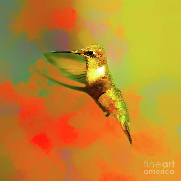 Wall Art - Photograph - End Of Summer Hummingbird by Darren Fisher