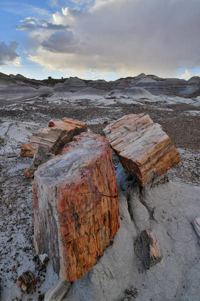 Photograph - End Of The Day In Petrified Forest Np by Ray Mathis