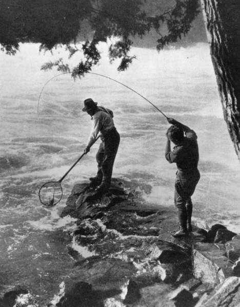 Sport Fishing Photograph - End Of The Fight by Hulton Archive