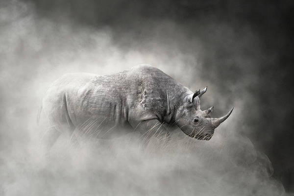 Wall Art - Photograph - Endangered Black Rhino In The Dust by Susan Schmitz