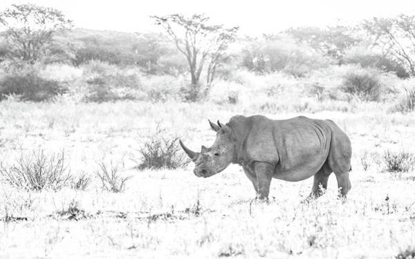 Photograph - Endangered by Hamish Mitchell