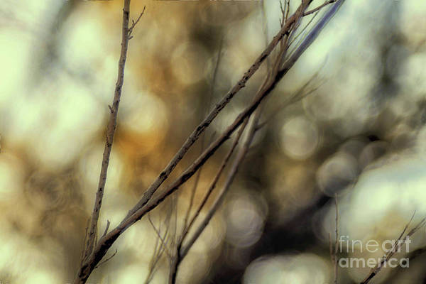 Photograph - Endeavor To Reap by Natural Abstract Photography