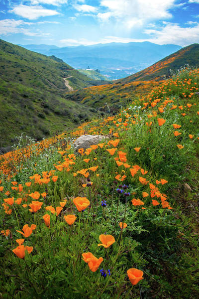Photograph - Endless Beauty In Walker Canyon by Lynn Bauer