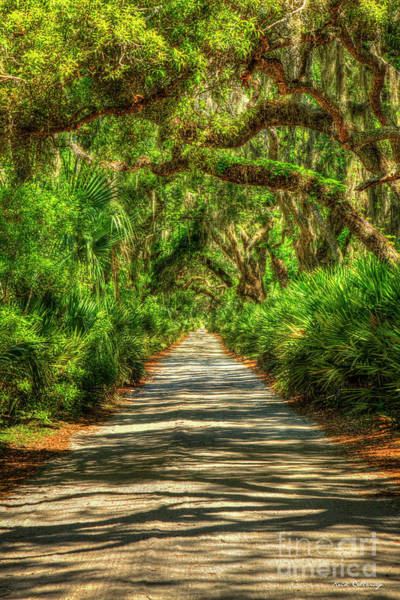 Wall Art - Photograph - Endless Shadows Main Road Cumberland Island National Seashore Georgia Landscape Art by Reid Callaway