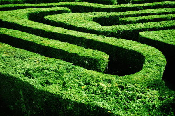 Court Photograph - England, London, Hampton Court Maze by Romilly Lockyer