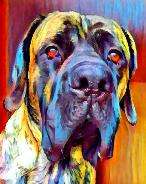 Wall Art - Painting - English Mastiff 2 by Chris Butler