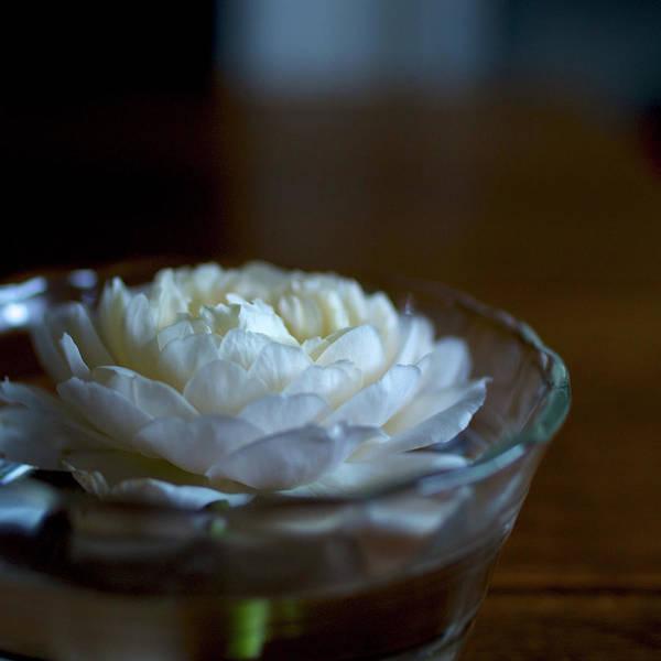 Rose Bowl Photograph - English Rose by Moriyu