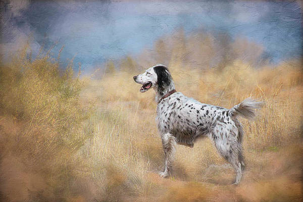 Photograph - English Setter Dog by Flying Z Photography by Zayne Diamond