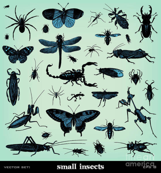 Small Wall Art - Digital Art - Engraving Vintage Insect Set From by Pio3
