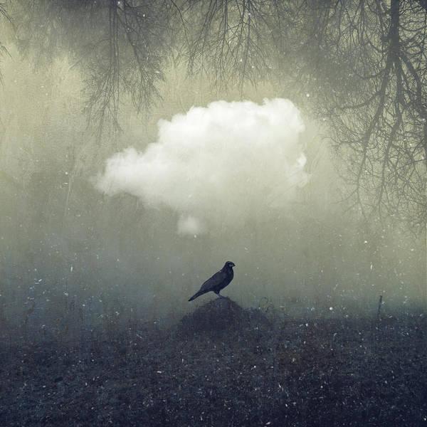 Photograph - Enigma - Proud Raven by Dirk Wuestenhagen