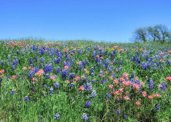 Photograph - Ennis Texas Bluebonnet Trail V4 041819 by Rospotte Photography