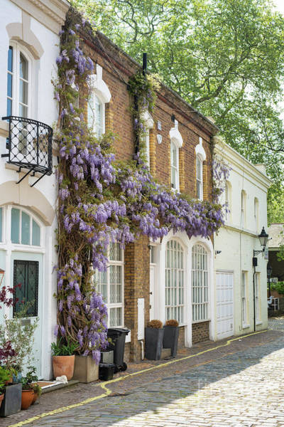 Wall Art - Photograph - Ennismore Gardens Mews Wisteria by Tim Gainey