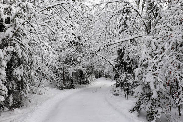 Photograph - Entering A Winter Wonderland by David T Wilkinson
