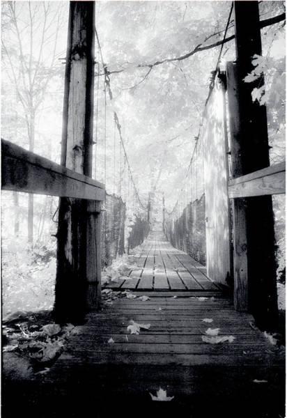 Photograph - Entrance by Jim Cook