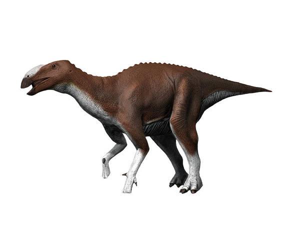 Photograph - Eotrachodon Orientalis Dinosaur, White by Nobumichi Tamura