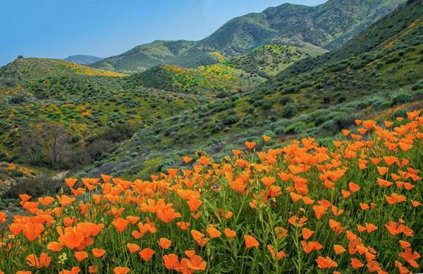 Photograph - Epic Poppy Bloom In Walker Canyon by Lynn Bauer
