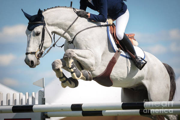 Wall Art - Photograph - Equestrian Sports, Horse Jumping, Show by Catwalkphotos