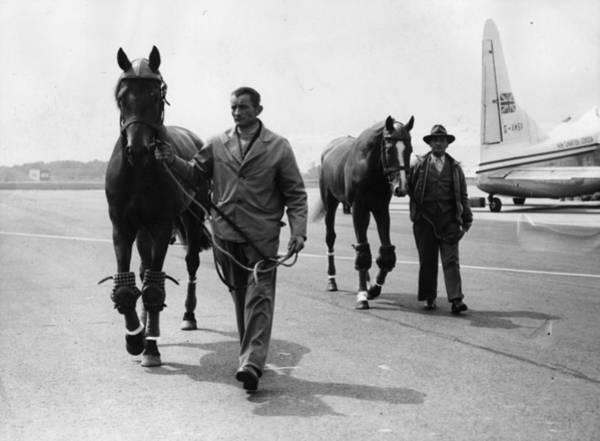 Arrival Photograph - Equine Arrivals by Dennis Oulds
