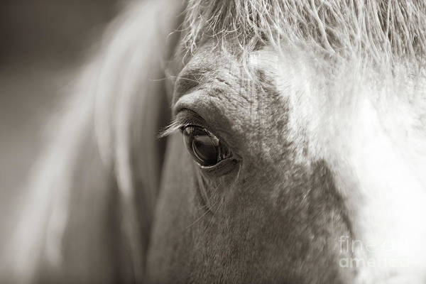 Photograph - Equine Eye by Dale Powell
