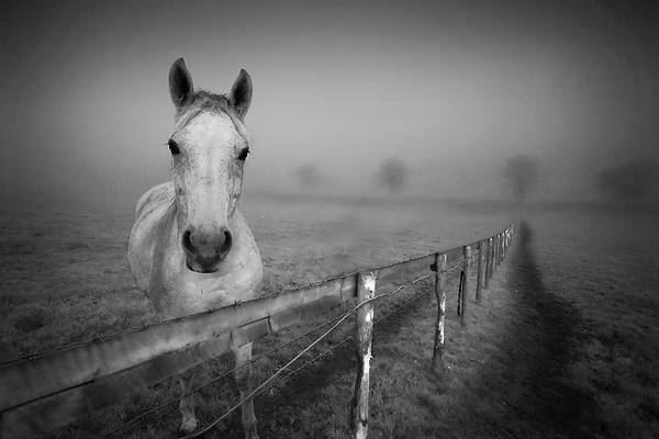 Wall Art - Photograph - Equine Fog by Taken With Passion