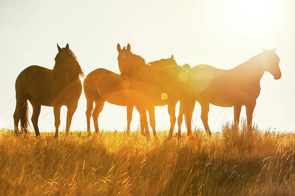 Photograph - Equine Glow by Todd Klassy