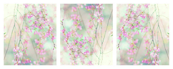 Wall Art - Photograph - Sweet Cherry Triptych by Jessica Jenney