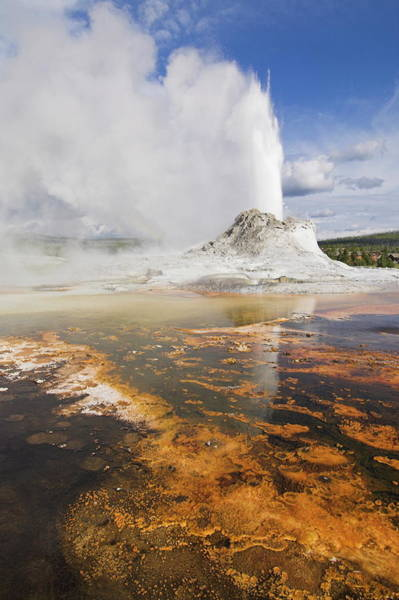 Upper Geyser Basin Photograph - Eruption Of Castle Geyser With by Neale Clarke / Robertharding