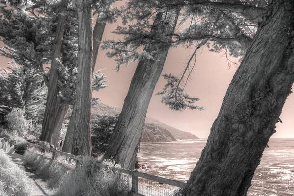 Wall Art - Photograph - Esalen Big Sur Cypress Trees by Jane Linders