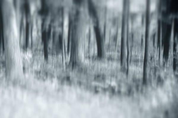 Photograph - Escape by Angie Tirado