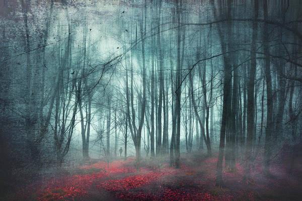 Photograph - Escape Route - Misty Forest Scenery by Dirk Wuestenhagen
